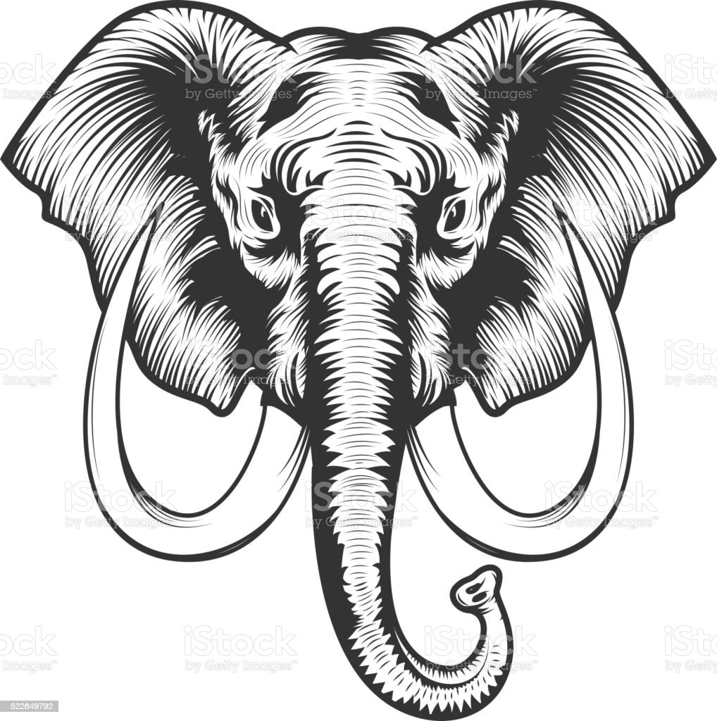 Elephant head illustration. vector art illustration