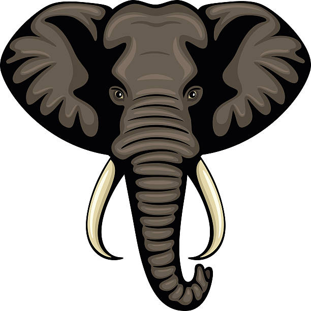Best African Elephant Illustrations, Royalty-Free Vector ...