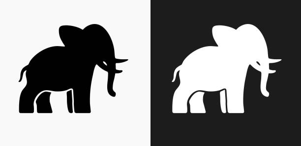 elephant icon on black and white vector backgrounds - elephant stock illustrations