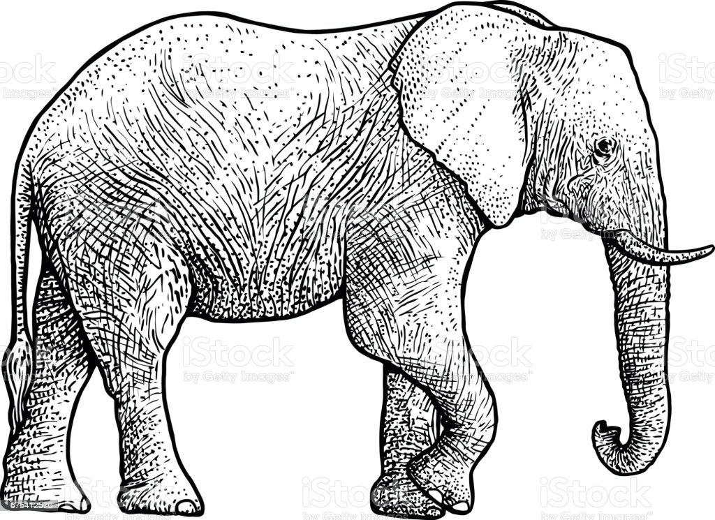 Line Art Elephant : Citas biblioteca personal de objetos encontrados