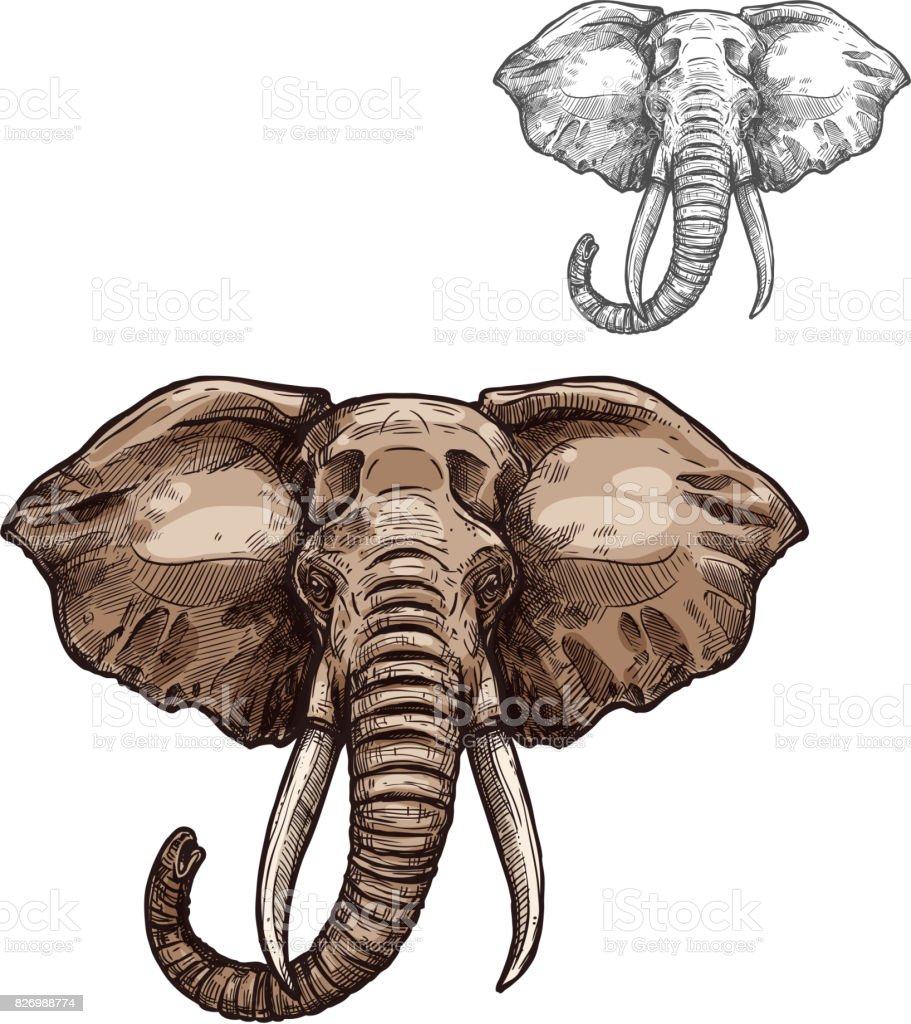 Elephant Isolated Sketch Of African Mammal Animal Stock ...