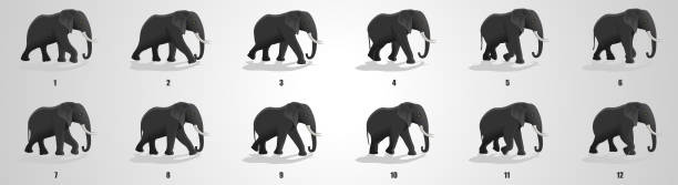 Elephant Run cycle animation Sequence Elephant Running animation frames and sprite sheet sequential series stock illustrations