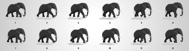 elephant run cycle animation sequence - sekwencja obrazu stock illustrations