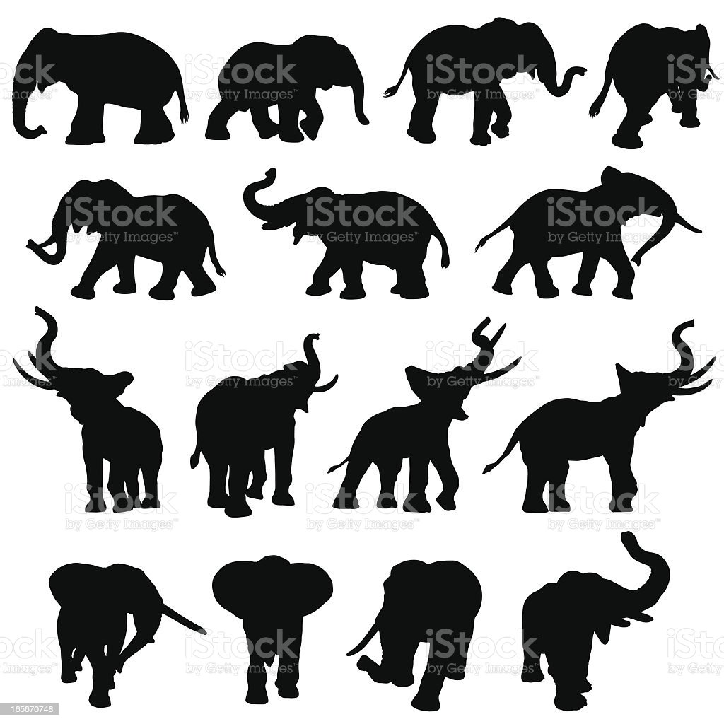 Elephant silhouette collection vector art illustration
