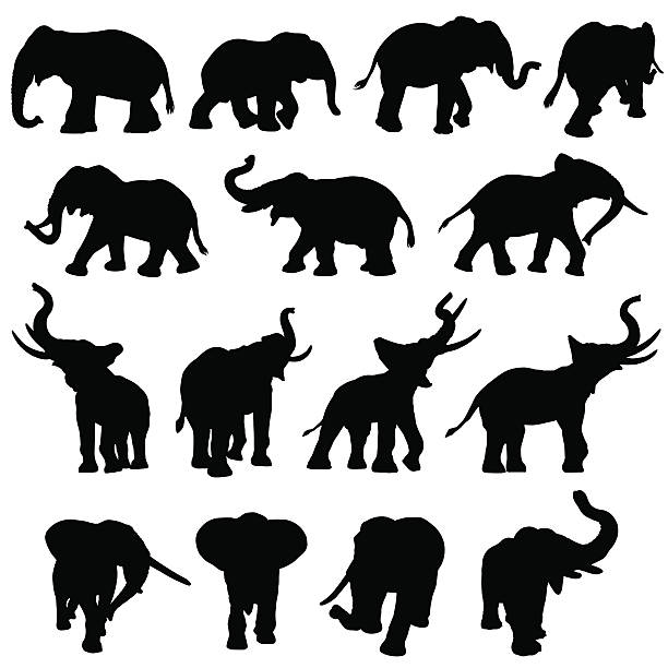 elephant silhouette collection - elephant stock illustrations