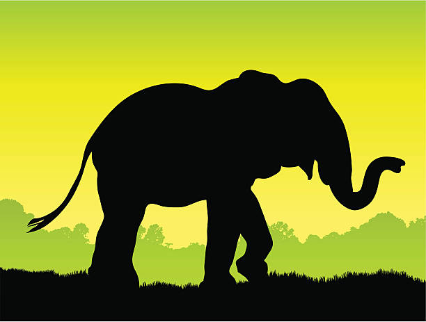 elephant silhouette in the wild vector art illustration