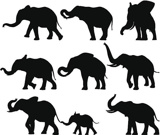 Elephant Silhouettes Set of design elements - Elephant Silhouettes. elephant stock illustrations