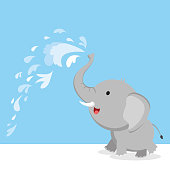 Elephant spray water with trunk