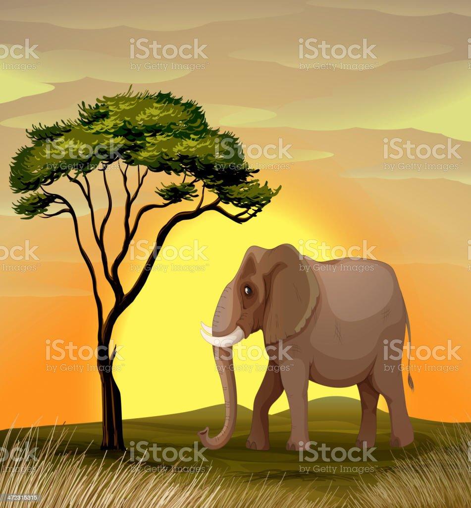 Elephant under a tree vector art illustration