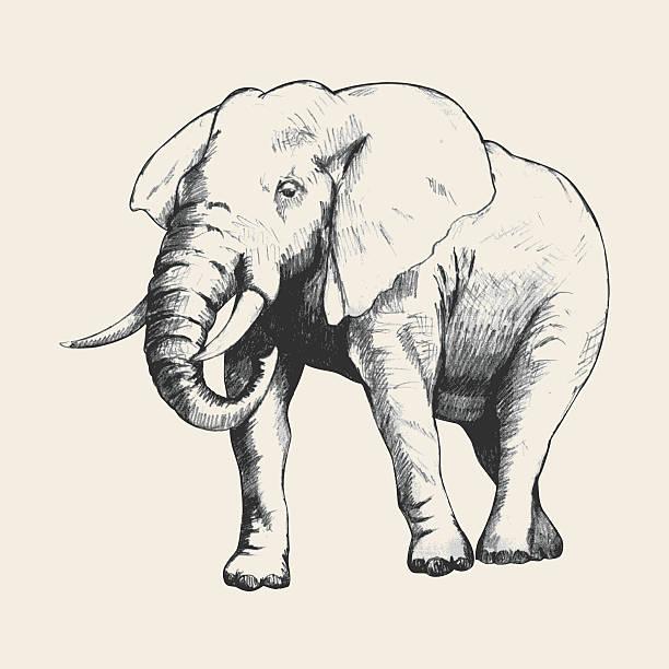 Elefant Gezeichnet