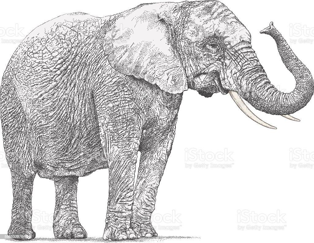 Elephant vector art illustration
