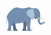 Elephant. Illustration on white background