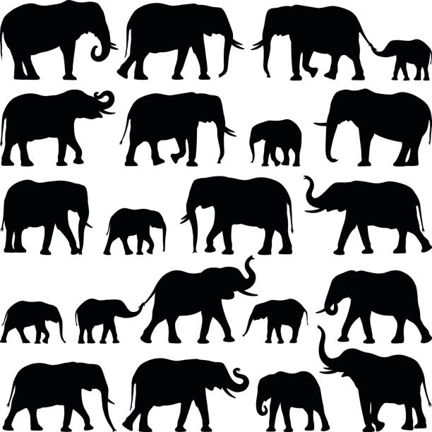 Elephants Elephant collection - vector silhouette illustration elephant stock illustrations