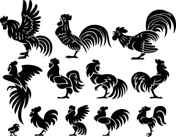 Eleven roosters in profile Eleven silhouettes of roosters in a profile. Isolated on a white background rooster stock illustrations