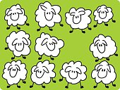 istock Eleven sheeps. 96260140