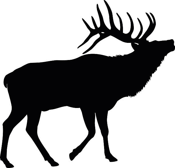 Elk Deer Silhouette Elk bull making a mating call elk stock illustrations