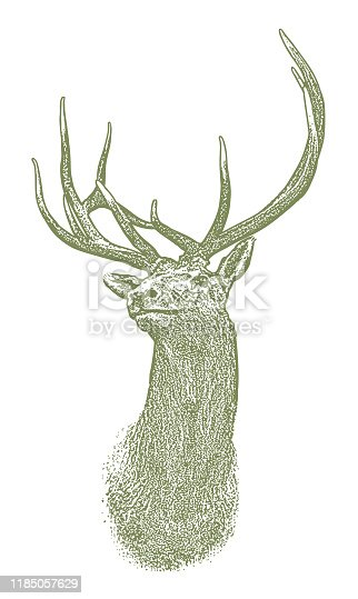 Vector Elk head illustration