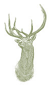 Vector Elk head illustration