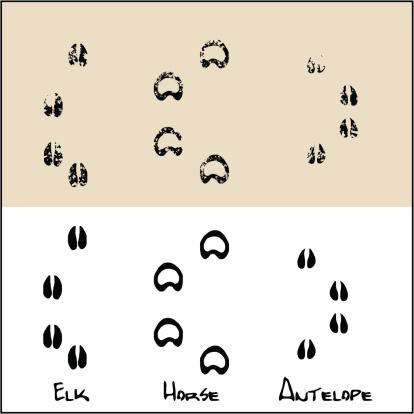 Elk - Horse  - Antelope