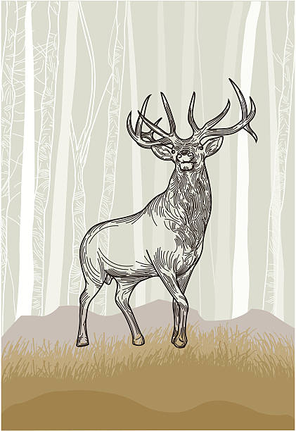 Elk in the Grasslands Forest vector art illustration