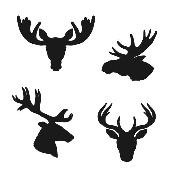 Elk moose, deer silhouettes, animals hunting icons Elk moose and deer silhouettes, animals and hunting vector icons, Elk stag and deer or reindeer and roe heads with antlers and horns, wild hunt and wildlife zoo symbols set moose stock illustrations