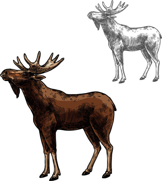 Elk vector sketch wild animal isolated icon Elk wild animal sketch vector icon side view. Wild mammal elk or moose species for wildlife fauna and zoology or hunting sport team trophy symbol and nature adventure club design elk stock illustrations