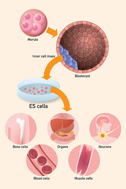 stem cell revisited This is a re-post of an article based on questions posed to a haematologist on a query on cord blood and peripheral blood stem cells we frequently still see these questions crop up from time to time in chat rooms and forums.