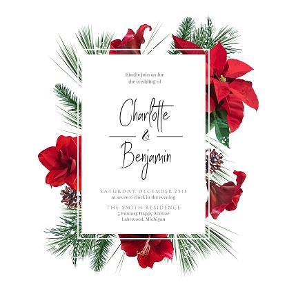 Emerald Christmas greenery, red poinsettia, amaryllis, spruce, fir vector design frame