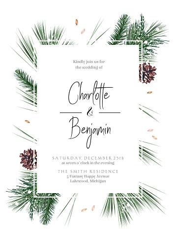 Emerald Christmas greenery, spruce, fir, pine cones seasonal vector design frame