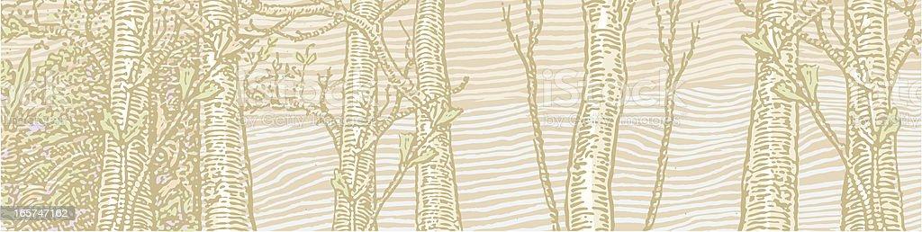 Emergence of Spring Birch Trees vector art illustration
