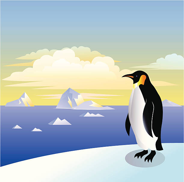 Emperor Penguin Emperor Penguin against arctic background. emperor penguin stock illustrations