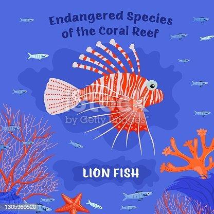 istock Endangered reef fish 1305969520
