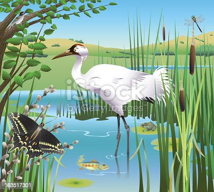 6 animals on the endangered list are together in a wetlands scene.