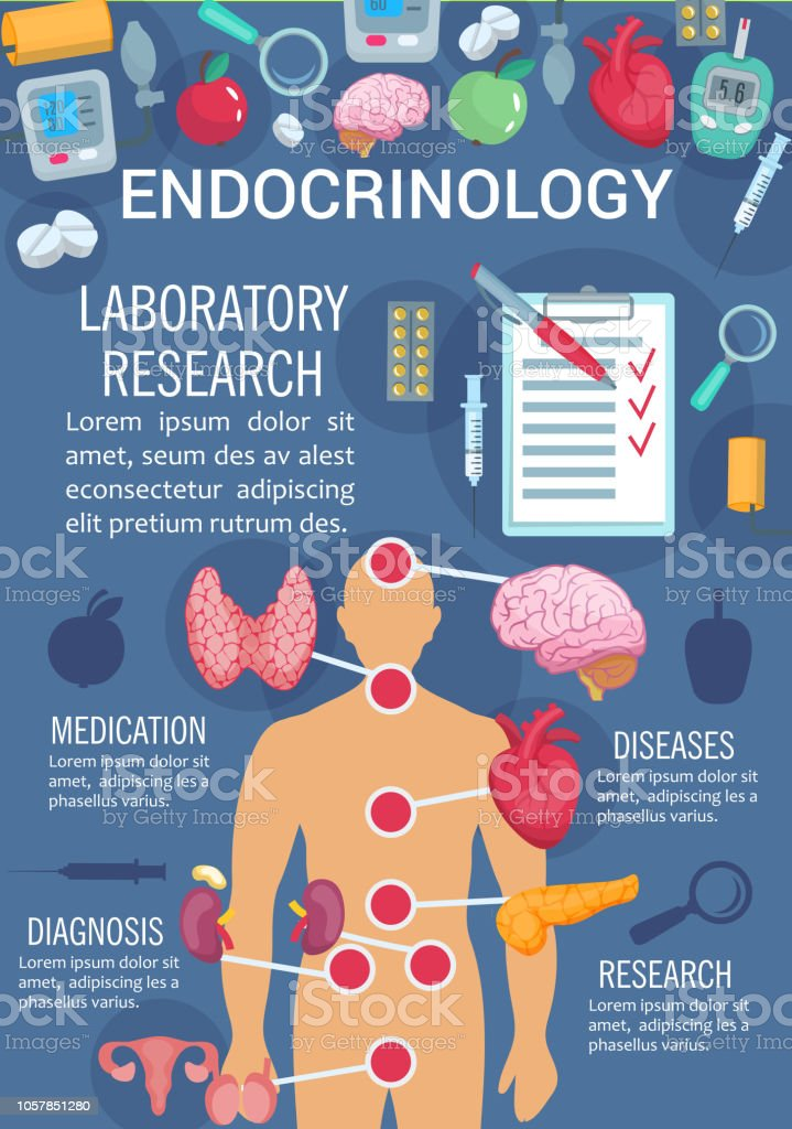 Endocrinology Poster With Human Endocrine System Stock Vector Art
