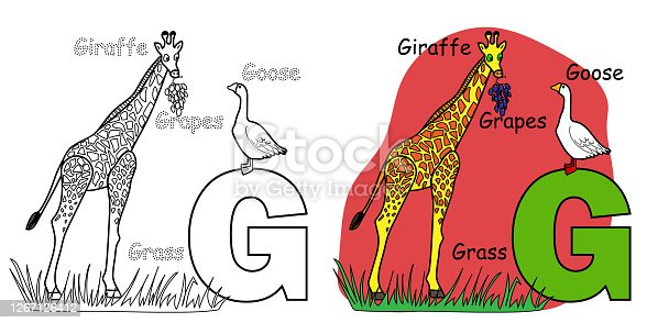 istock English alphabet coloring book for children. Letter G for Giraffe, Goose, Grapes. Vector illustration. 1267126412