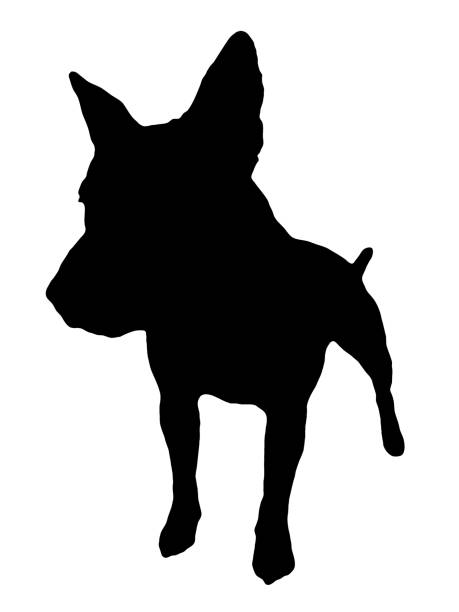 Royalty Free English Bull Terrier Clip Art Vector Images