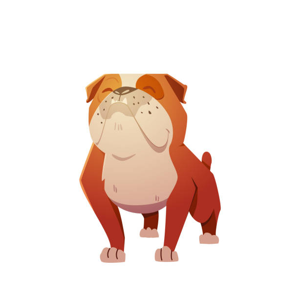 bildbanksillustrationer, clip art samt tecknat material och ikoner med engelska bulldog hund karaktär. - bulldog