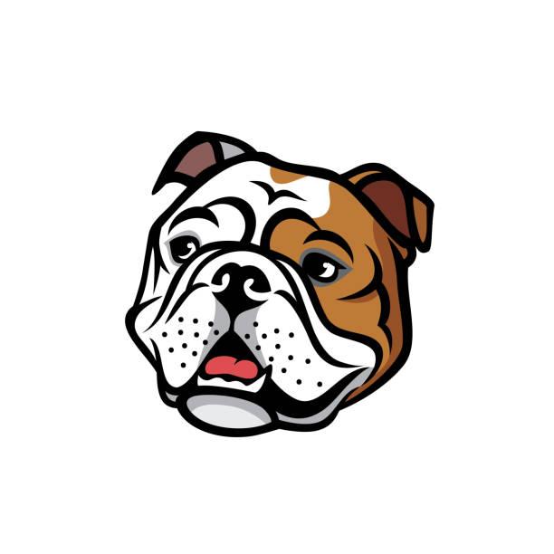bildbanksillustrationer, clip art samt tecknat material och ikoner med engelska bulldog face - isolerade vektorillustration - bulldog