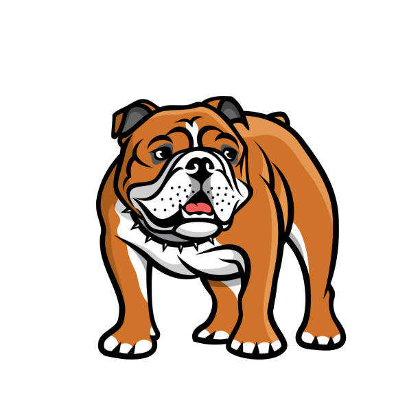 bildbanksillustrationer, clip art samt tecknat material och ikoner med engelsk bulldog-isolerad vektor illustration - bulldog