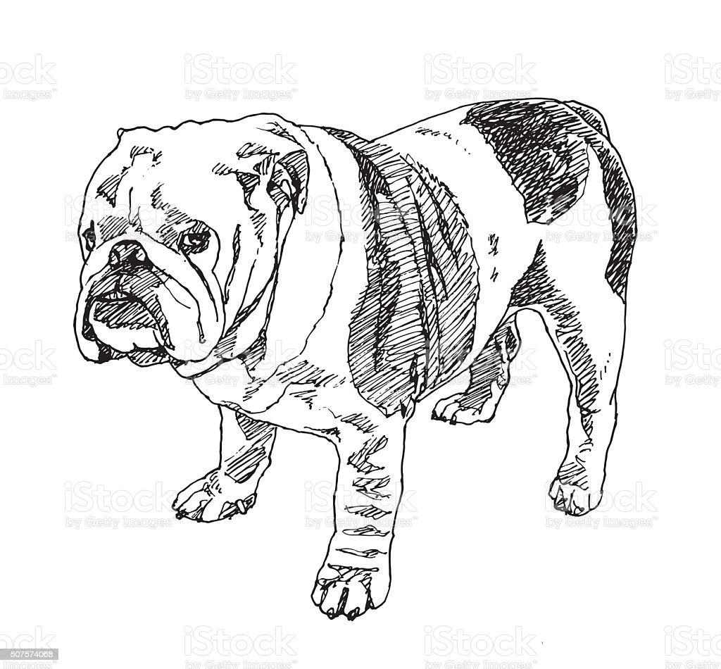 English Bulldog Vector Stock Vector Art & More Images of Animal ...