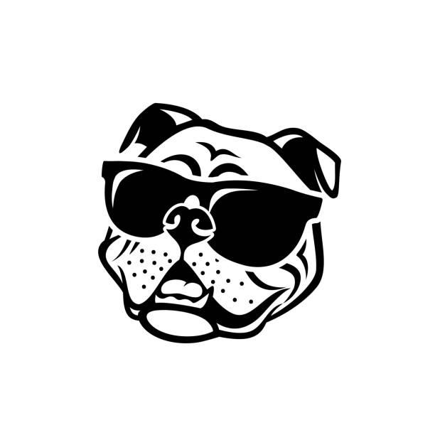 bildbanksillustrationer, clip art samt tecknat material och ikoner med engelsk bulldog bär sol glasögon-isolerad skisserat vektor illustration - bulldog