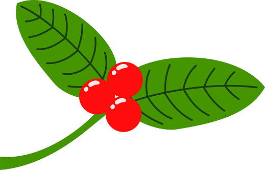 English Holly Leaves And Fruits Stock Vector Art & More