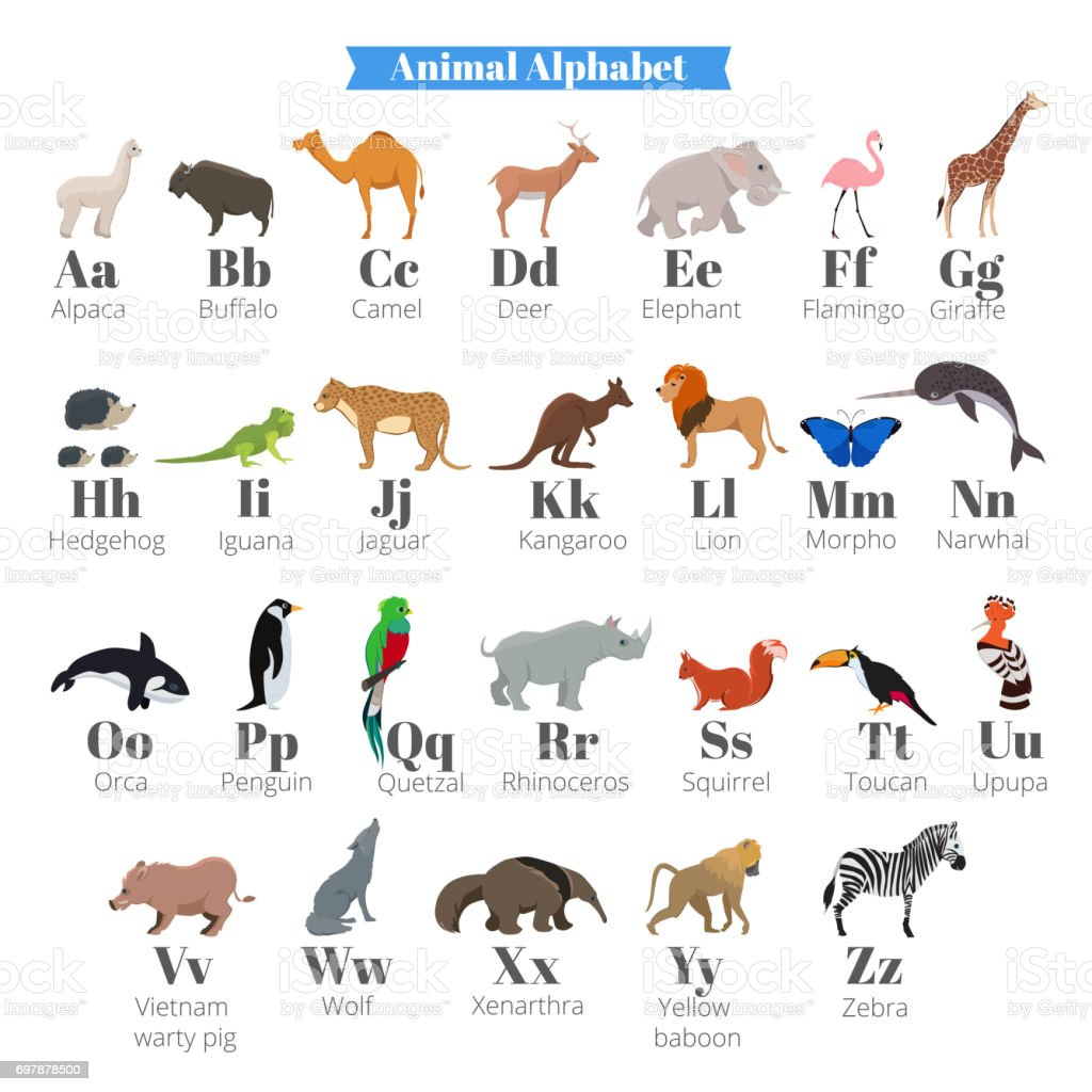 english vector alphabet for kids with cute wild animals near