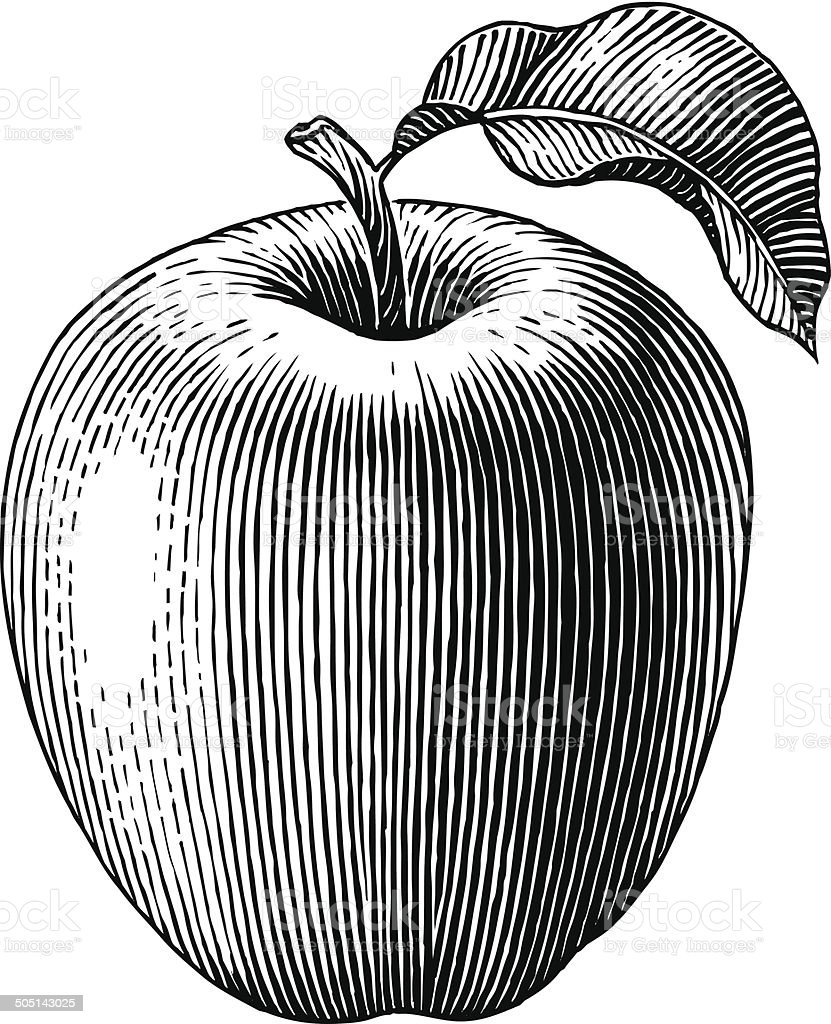 Engraved apple vector art illustration