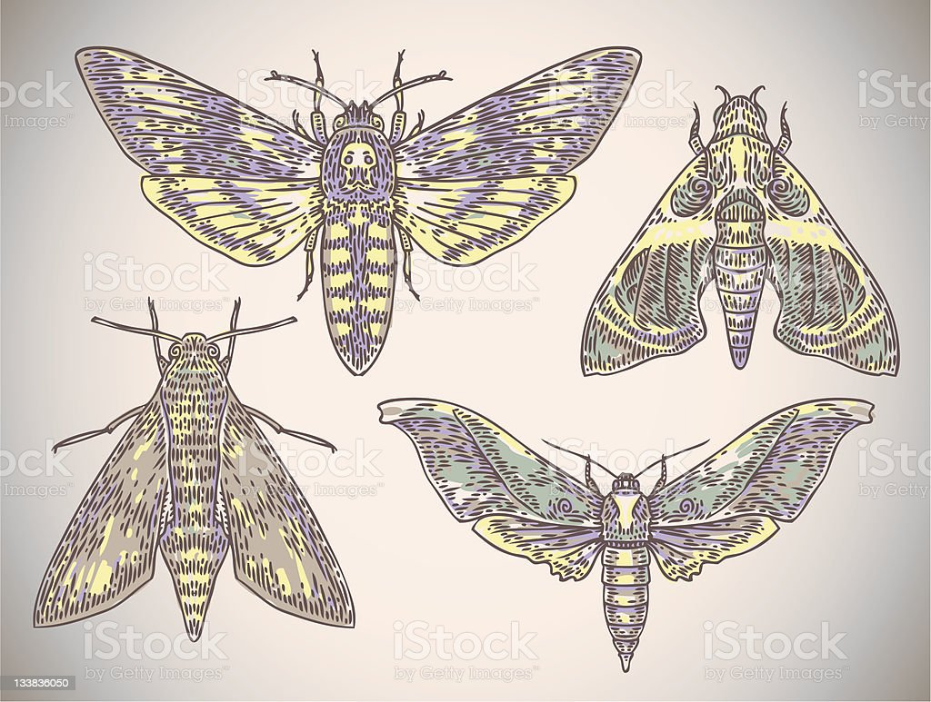 engraved moths royalty-free engraved moths stock vector art & more images of animal