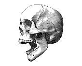 Engraved screaming skull drawing isolated on white BG