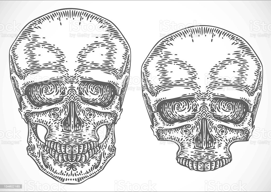 engraved skulls vector art illustration