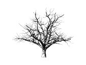Monochrome engraving drawing dead tree illustration isolated on white background