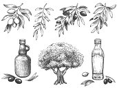 Engravied olive oil. Hand drawn olives tree, sketch oil bottle and olive branches with leaves vector illustration set. Branch olive tree, plant oil vegetarian