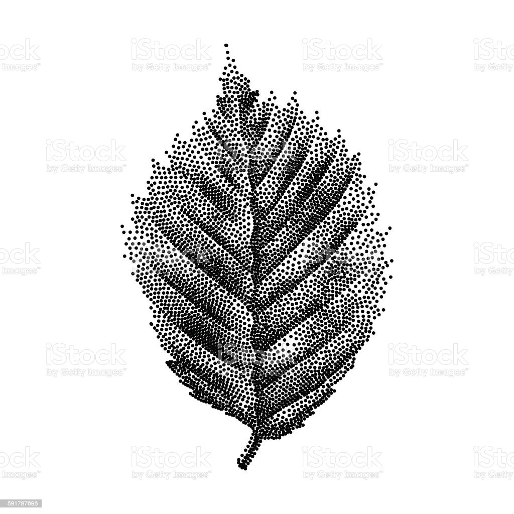 Engraving Birch Leaf Hand Drawn Vector Illustration – Vektorgrafik